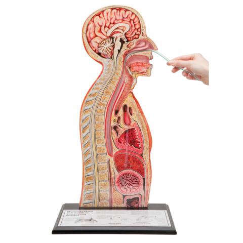 経管栄養法モデル