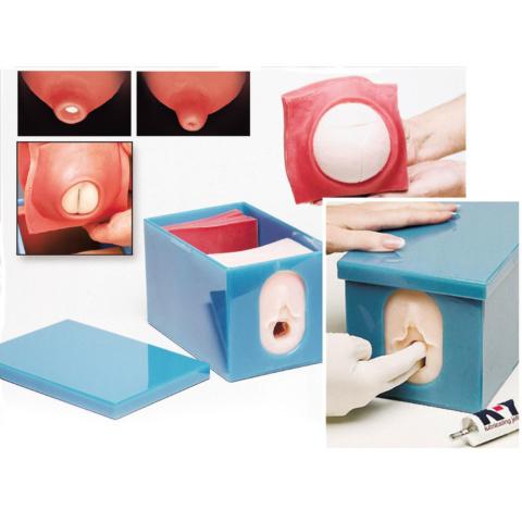 妊娠・分娩過程モデルセット