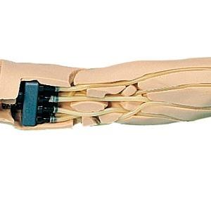 腕部の内部,血管の走行