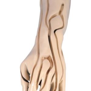 手背の内部,血管の走行
