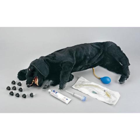 イヌの心肺蘇生法練習モデル