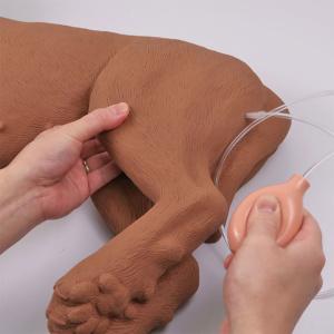 脈拍を再現(左大腿部の内側で測定)