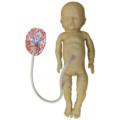 吸引出産用胎児モデル