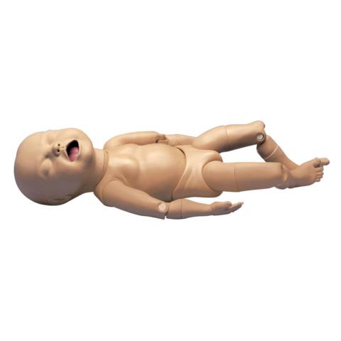 有関節胎児付,レオポルド手技用モジュール(W45025用)