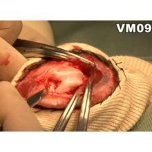 イヌの膝蓋骨内方脱臼整復法とバンテージ