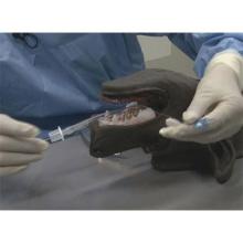 イヌの気管挿管及び気管切開術