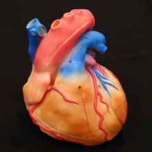 Cardio Model E.V. Color