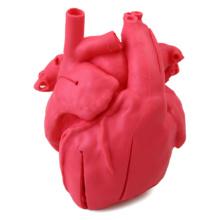 先天性小児心疾患モデル 修正大血管転位+心室中隔欠損(VSD)