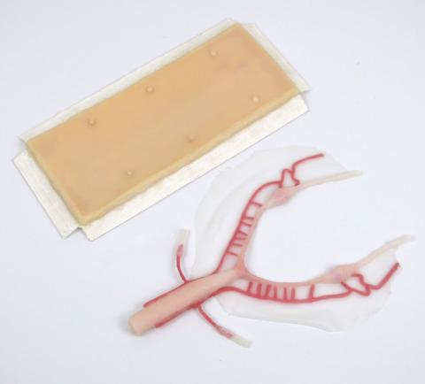 交換用皮膚,生殖器セット(W65751用)