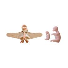ウシの子宮・胎児模型5種セット,会陰部パネル付