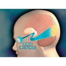 神経系II 末梢神経、感覚系