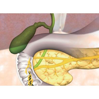 消化系II 肝臓・胆嚢・膵臓、代謝