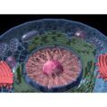 細胞・遺伝子