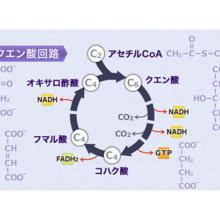 生体エネルギー(I)