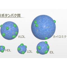 生体エネルギー(II)