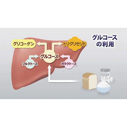 栄養の摂取と利用