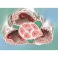 腎・泌尿器の領域