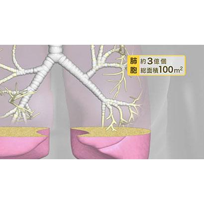 呼吸器系疾患の治療薬