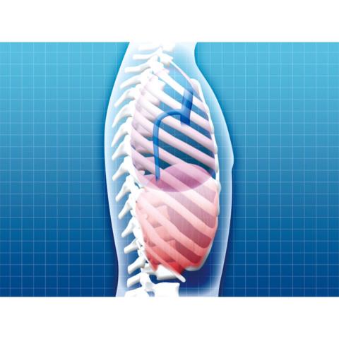 呼吸・循環器系の科学
