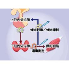 代謝・内分泌検査