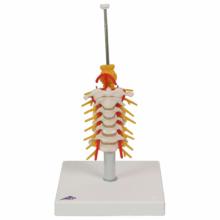 頚椎取付けオプション