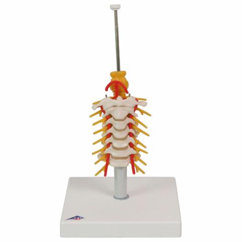 頚椎取り付けオプション